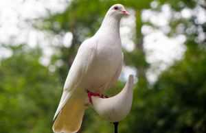 white dove on white bird figure stand