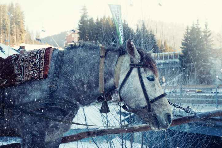 animal cold frost horse